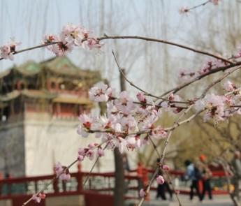 1Beijing (323)