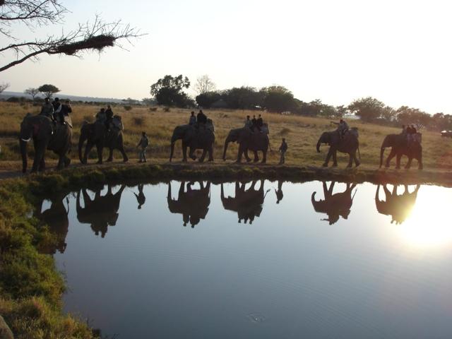 Passeio de elefante- Africa do Sul